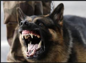 Stray Dog.jpg
